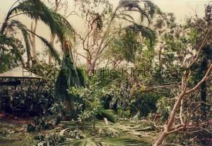 Cyclone-Rosita-Our-Garden