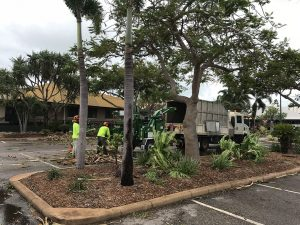 Shire workers clearing broken trees from Chinatown, Broome