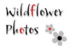 Wildflower Photos