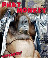 Phat Monkey