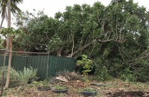Uprooted tree smashes fence in Forrest Street, Broome